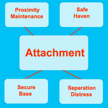 Attachment Theory in Adults