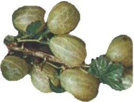 Gooseberry - nutritional information