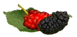 Mulberries - nutritional information